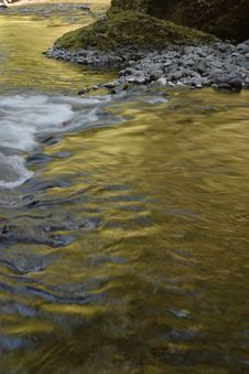 Free Golden Wahclella Creek Stock Photo - 950060
