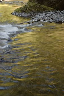 Free Golden Wahclella Creek Stock Photos - 950063