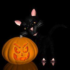 Pumpkin And Black Cat Stock Photos