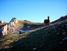 Horses In Mountains Stock Images