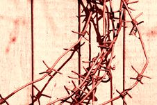 Free Barbed Wire Stock Photography - 952552