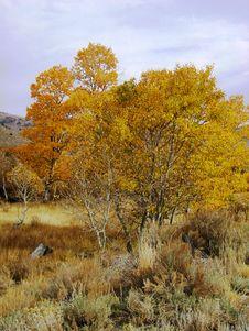 Free Yosemite Fall Colors Royalty Free Stock Image - 953616
