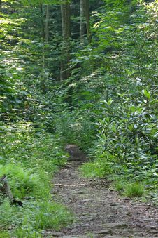 Free Woodland Path Stock Photo - 953870