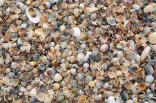 Free Shells Stock Photo - 954110