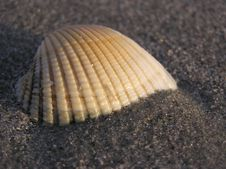 Free Seashell By The Seashore Royalty Free Stock Images - 954319