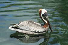 Free Detail Heron Stock Photos - 954723