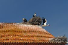 Free Storks In The Nest Royalty Free Stock Image - 955196