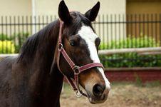 Free Horse Royalty Free Stock Photo - 955335