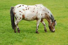 Free Horse 5 Royalty Free Stock Photo - 955445