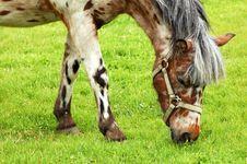Free Horse 7 Stock Image - 955481