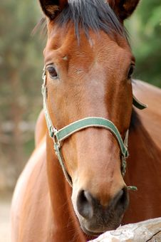 Free Horse 4 Royalty Free Stock Photography - 956067