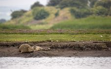 Female Seal With Pup Stock Photo