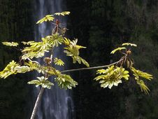 Free Waterfall Behind A Small Tree Stock Images - 957384
