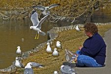 Free Woman Feeding Seagulls Stock Images - 957824