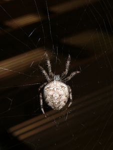 Free Spider Stock Image - 957871