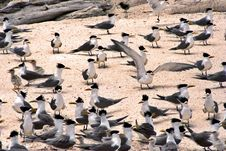 Free Birds On Beach Royalty Free Stock Photos - 958328