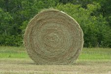 Free Hay 2 Royalty Free Stock Photo - 958865