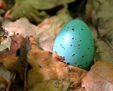 Free Green Egg Royalty Free Stock Photos - 958958