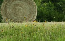 Free Hay With Sun Flower Royalty Free Stock Photography - 959057