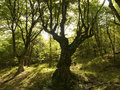 Free Green Forest In Bulgaria Royalty Free Stock Photos - 9505348