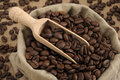 Free Coffee Beans Stock Photography - 9506812