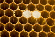Free Honeycomb 006 Stock Photography - 9501282