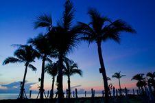 Palm Tree Under Sunrise Royalty Free Stock Photo