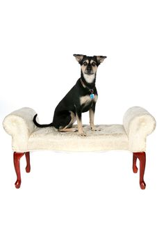 Free Big Black And Tan Dog Sitting On The Furniture Royalty Free Stock Image - 9502306