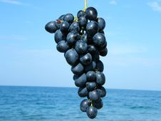 Free Grapes Royalty Free Stock Photography - 9503537