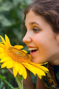 Free Beauty Teen Girl And Sunflower Stock Image - 9503671