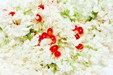 Free Homeopathic Pills And Flowers Royalty Free Stock Photo - 9503835