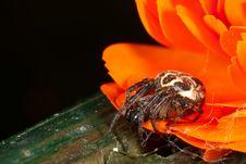 Free Garden Spider Stock Photography - 9504242