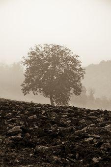 Free Tree Royalty Free Stock Photo - 9506175