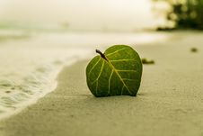 Free Green Ovate Leaf On Sand Near Shore Stock Photos - 95031303