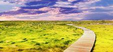Free Boardwalk Passing Through Wetland Royalty Free Stock Image - 95031396
