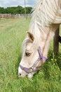 Free Horse Feeding Royalty Free Stock Photos - 9512598