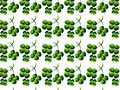 Free Clover Background Stock Photo - 9514610