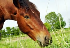 Free Eating Horse Stock Photography - 9510762