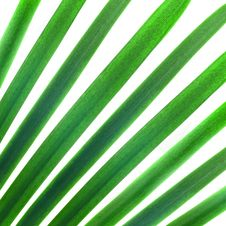 Free Green Palm Stock Photos - 9514703