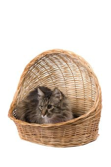 Free Cat In Wicker Basket Stock Photography - 9515222