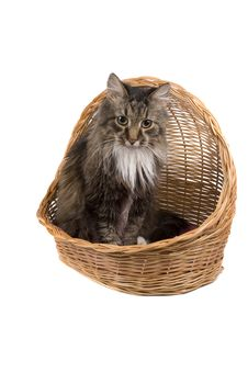 Free Cat In Wicker Basket. Stock Photos - 9515253