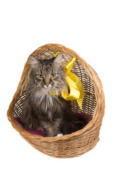 Free Cat In Wicker Basket. Royalty Free Stock Images - 9515269