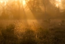 Free Morning Cobweb Royalty Free Stock Image - 9516706