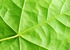 Free Leaf Stock Image - 9519741