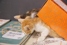 Free Cat, Carnivore, Whiskers, Felidae Stock Image - 95165941
