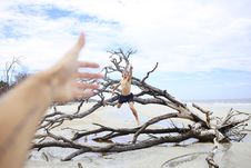 Free Man Jumping On Leafless Tree Stock Image - 95166081
