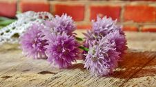 Free Chive Flowers Royalty Free Stock Photo - 95166125