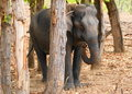Free A Female Elephant In Jungle Royalty Free Stock Images - 9527469