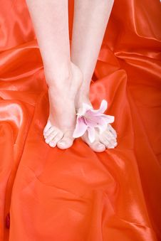 Feet With Petals Stock Image