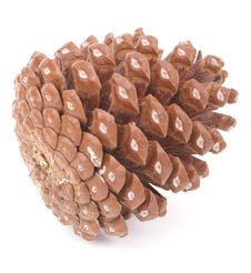 Free Pinecone Stock Images - 9524254